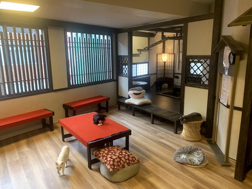 猫カフェ「きゃりこ武蔵野店」の店内イメージ