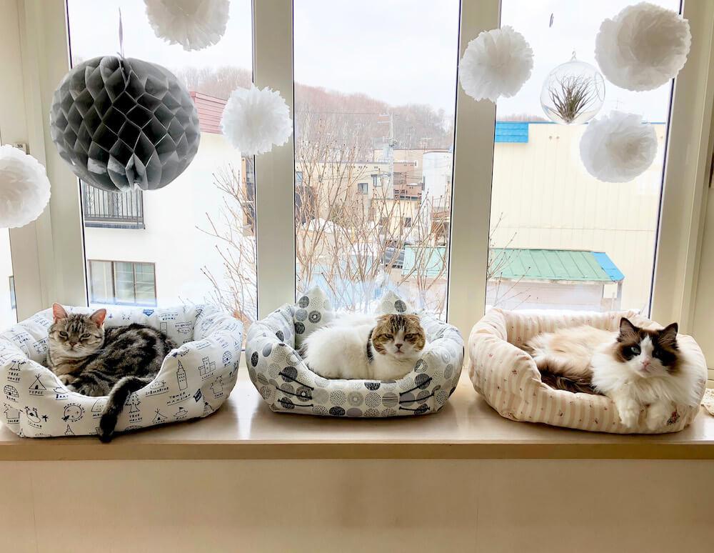 猫ベッドに座る3匹の猫 by jun.k