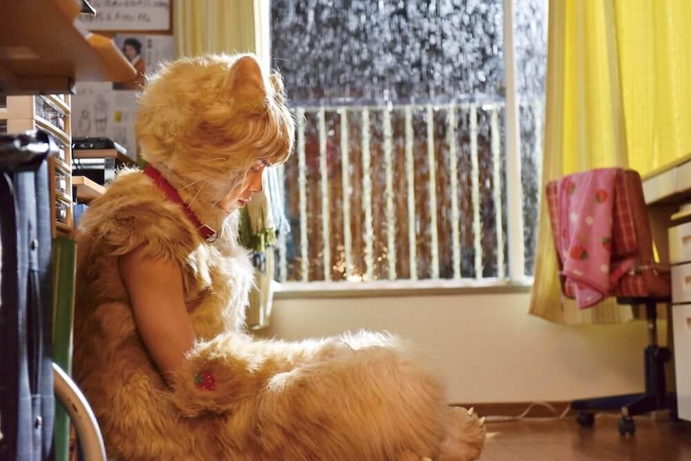 映画「トラさん~僕が猫になったワケ~」のワンシーン