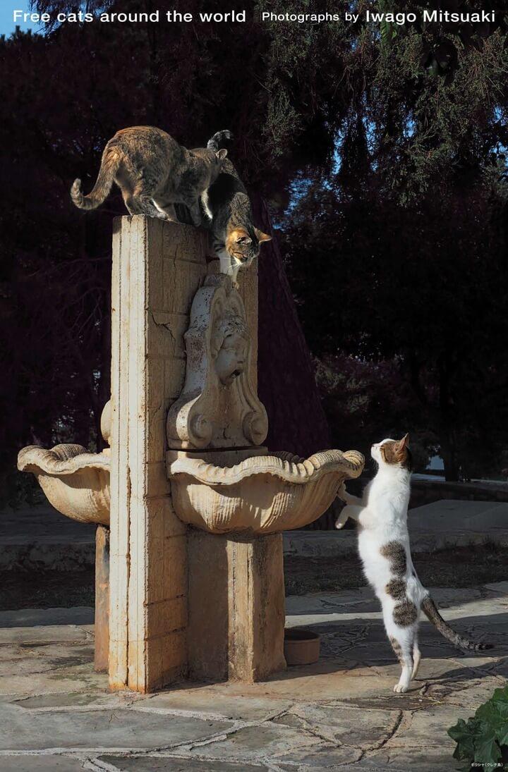ギリシャ(クレタ島)の遺跡で遊ぶ2匹の猫 by 岩合光昭カレンダー「世界の自由ネコ2020」