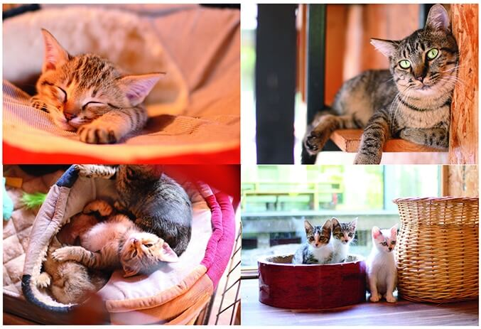 てしま旅館の猫庭で暮らす保護猫たち