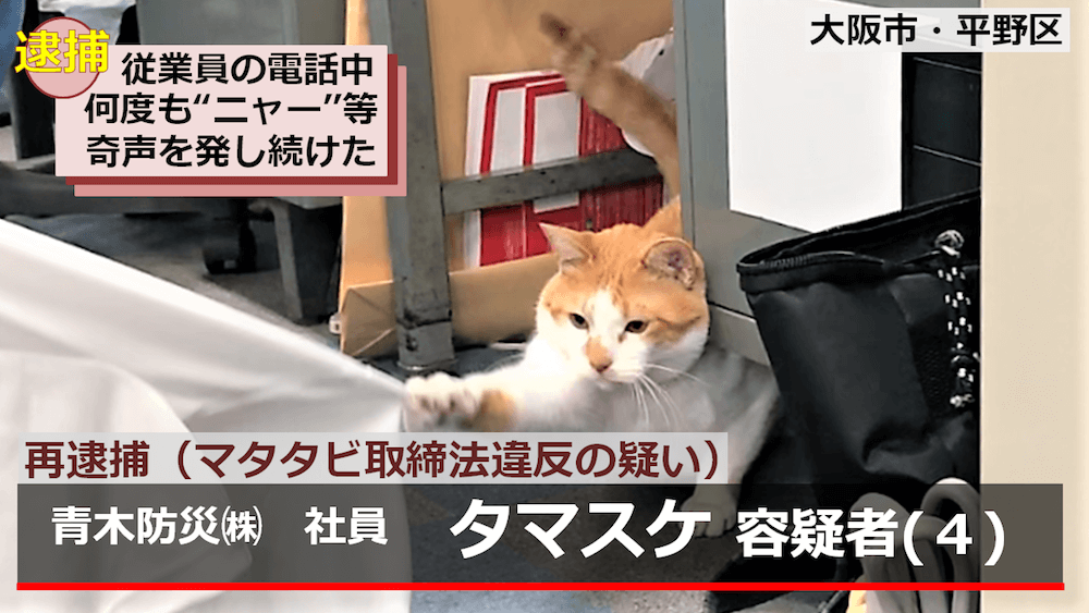 マタタビ取締法違反の容疑で逮捕された青木防災の広報担当「猫のタマスケ」