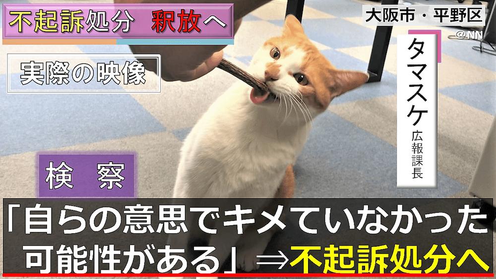 不起訴処分で釈放された青木防災の広報担当「猫のタマスケ」