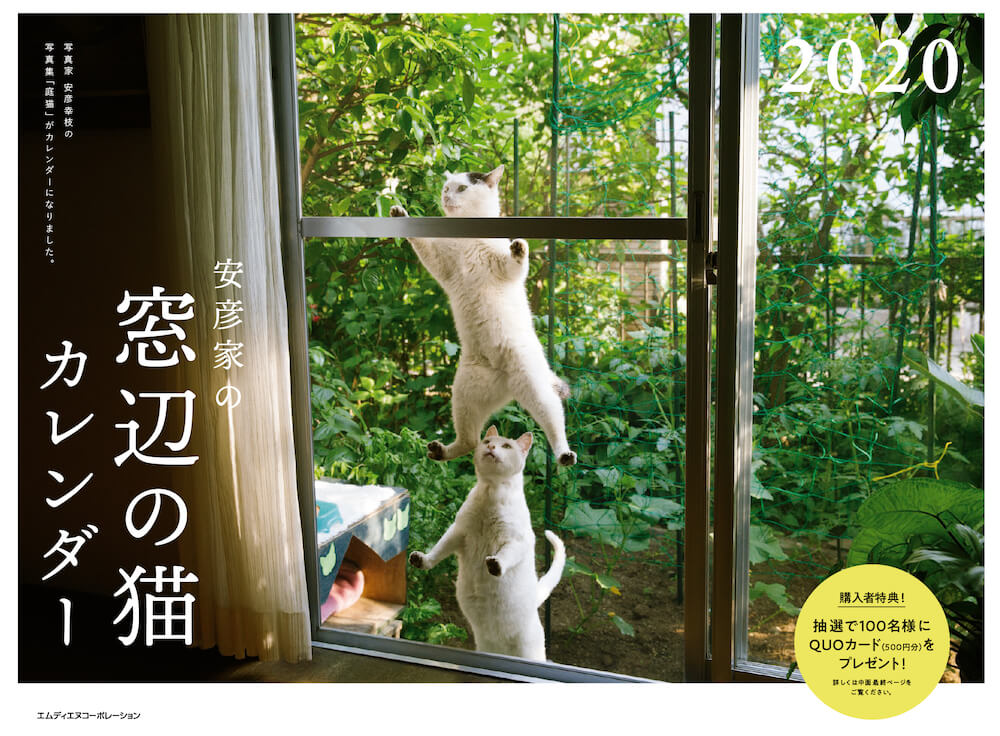 窓際の網戸をつたって登る猫 by 「2020 安彦家の窓辺の猫 カレンダー」の表紙