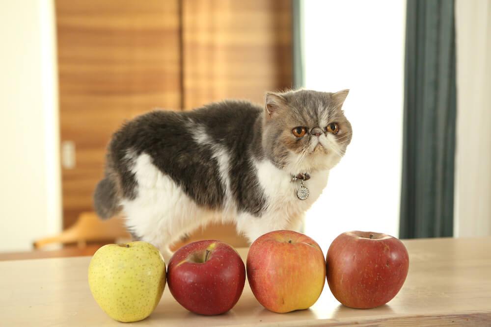 にゃんコールの猫スタッフ「うに」