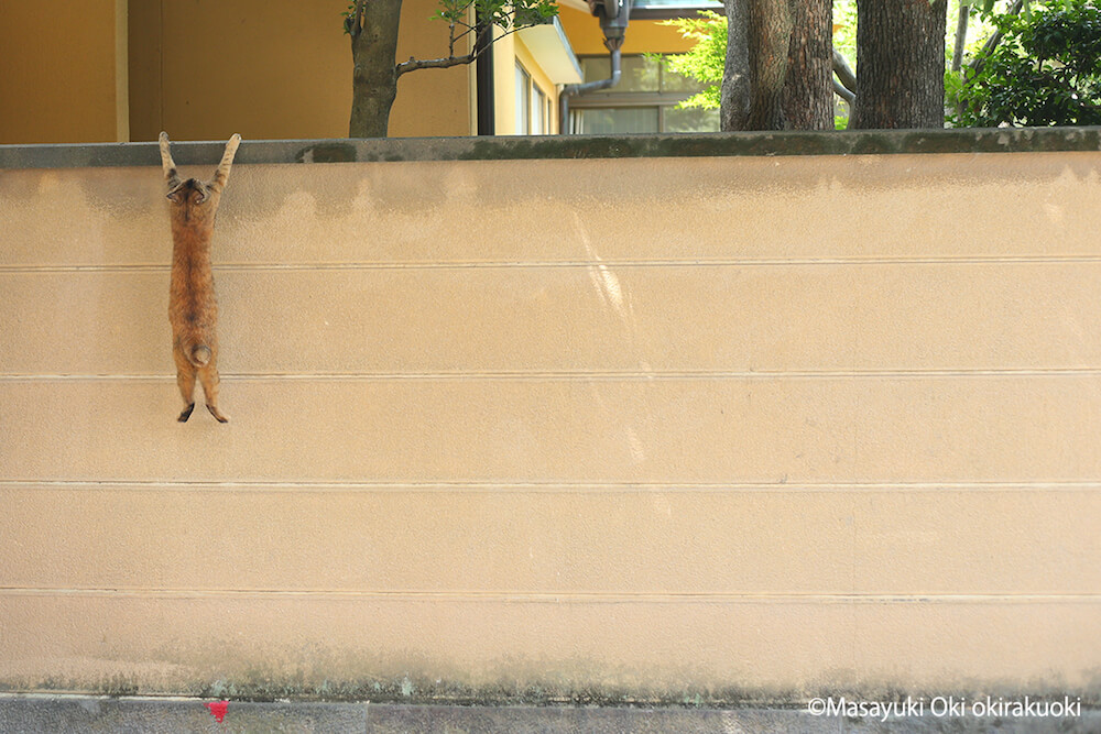 沖昌之が撮影した猫の写真 by ねこがかわいいだけ展