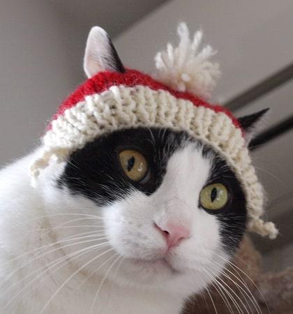 作家「徒然猫屋。」が制作した猫の帽子