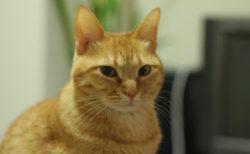 愛猫の健康寿命を伸ばすのニャ!服部幸獣医師によるセミナー「sippo猫塾」が東京と大阪で開催