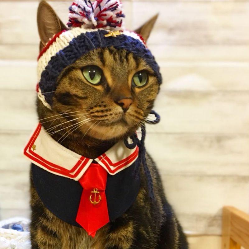 耳が出せる猫用の帽子 by 徒然猫屋(つれずれねこや)。
