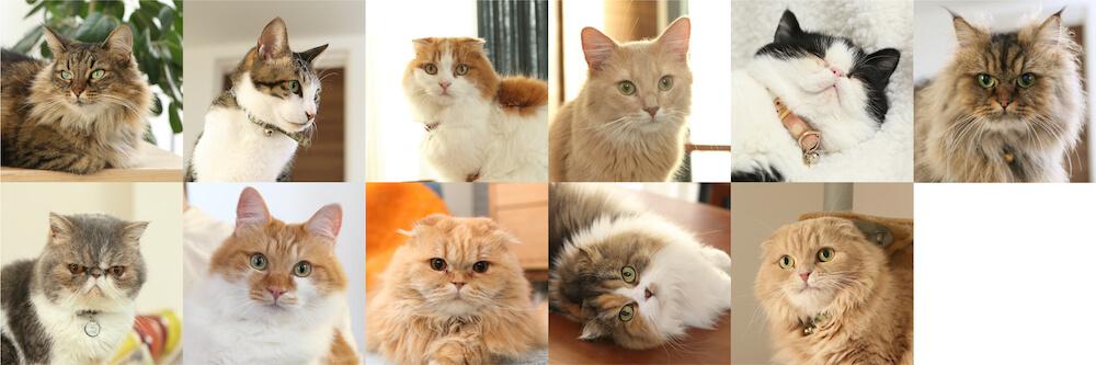 にゃんコールの猫スタッフで鈴木ゆうこさんの飼い猫11匹