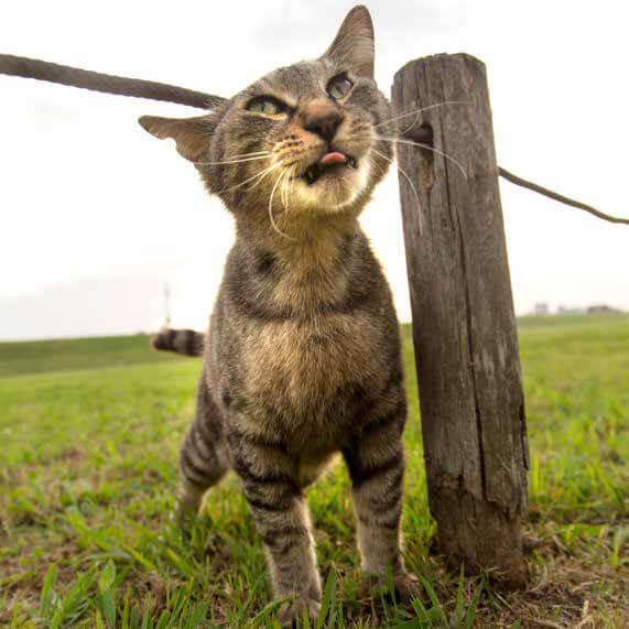 頭がロープに引っかかって面白顔になるキジトラ猫 by 沖昌之「必死すぎるネコ ~前後不覚篇~」