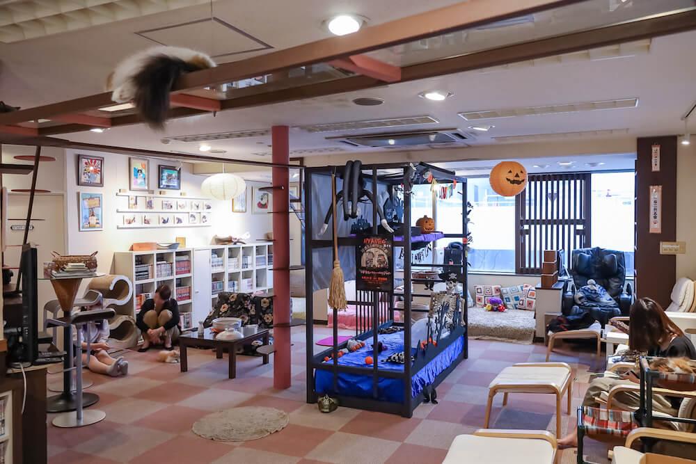 ハロウィン仕様のディスプレイで装飾された「猫カフェ 猫家」の店内