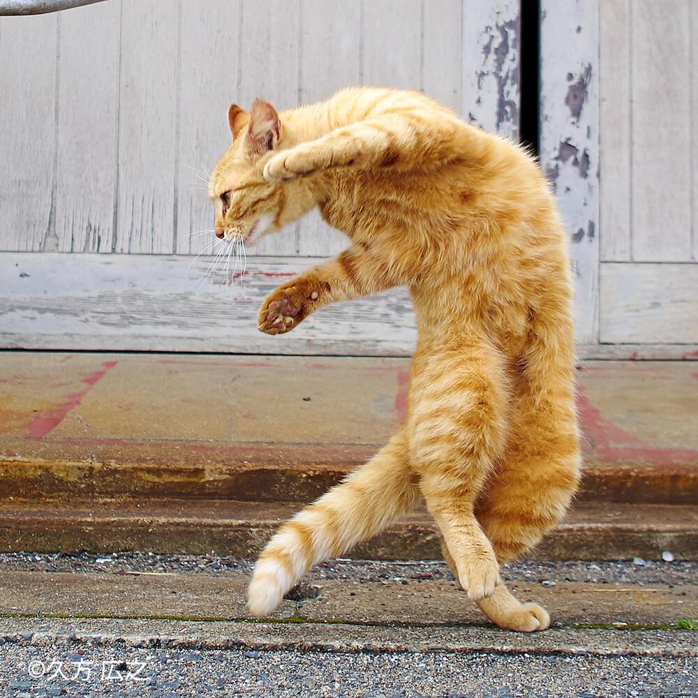 久方広之が撮影した拳法の構えをみせる猫の写真 by ねこがかわいいだけ展