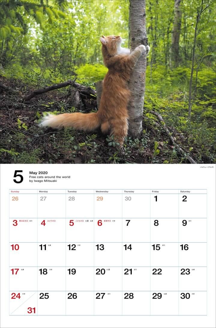 ノルウェー(アルタ)の森で木につかまる猫 by 岩合光昭カレンダー「世界の自由ネコ2020」