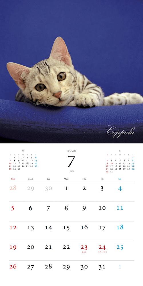 「パリにゃん カレンダー 2020」7月のカレンダーイメージ