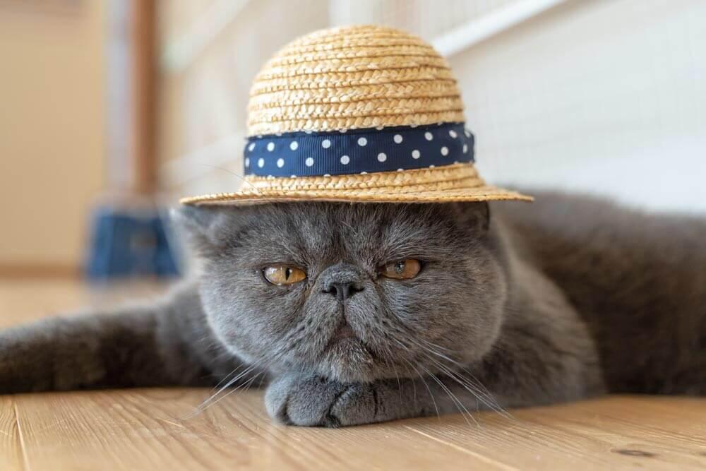 ニャンズカードの「キャラが濃い猫コンテスト」募集猫イメージ