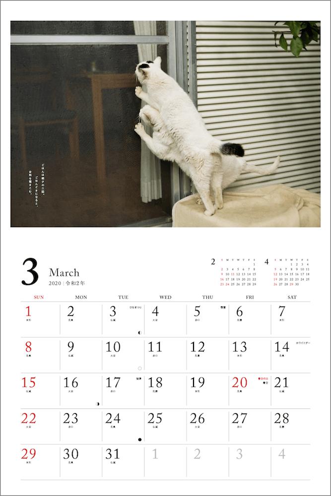 2匹一緒になって窓の外から家の中を覗く猫 by 「2020 安彦家の窓辺の猫 カレンダー」の表紙