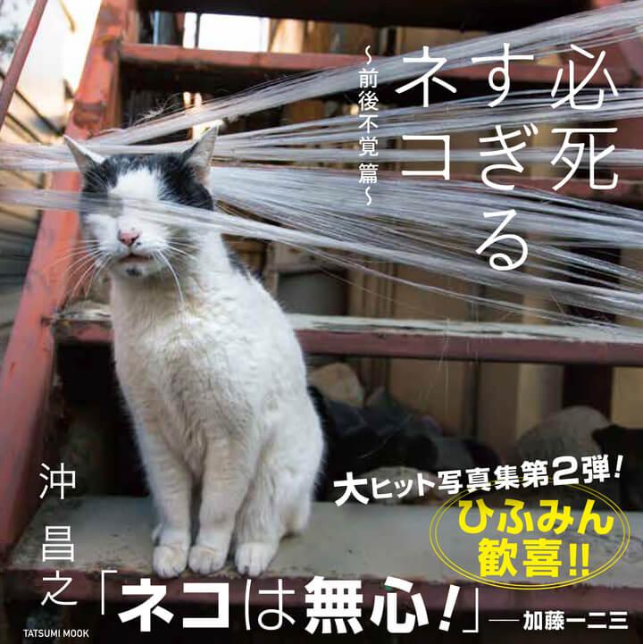 沖昌之の写真集「必死すぎるネコ ~前後不覚篇~」通常版の表紙カバー