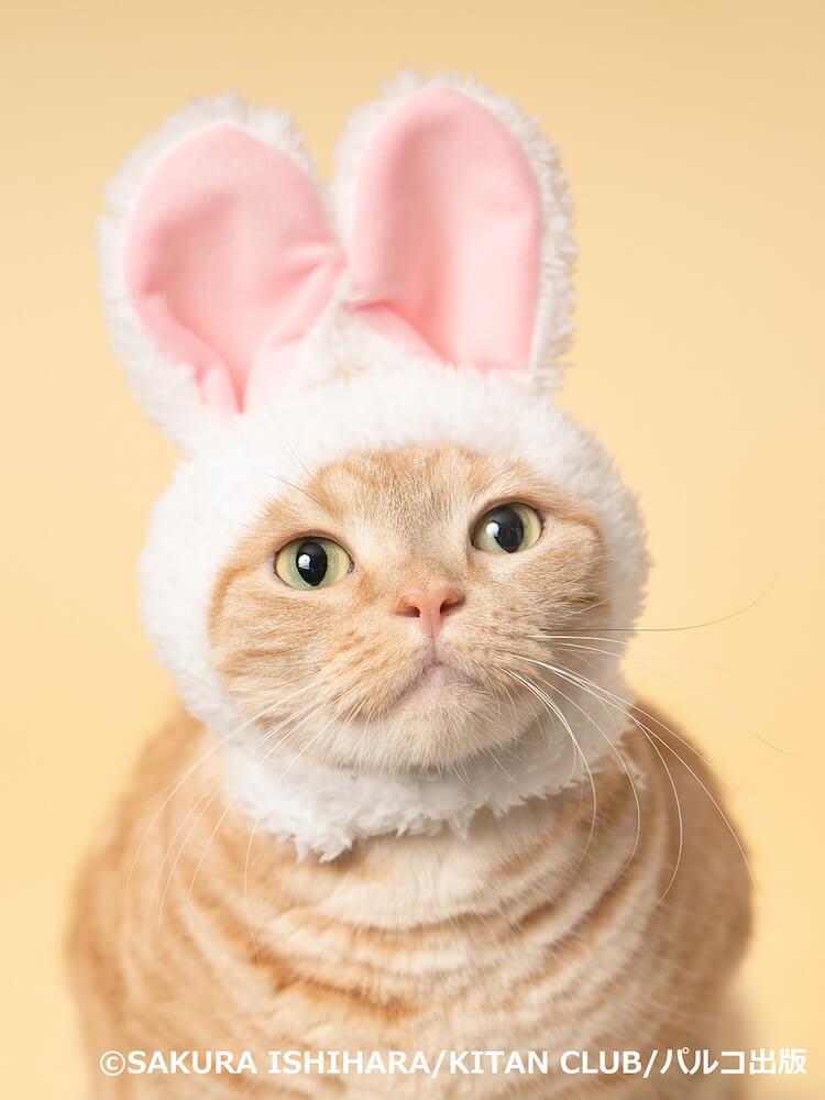 石原さくらが撮影したウサギのかぶりものを装着した猫の写真 by ねこがかわいいだけ展