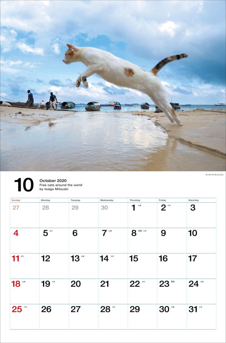 タンザニア(ザンジバル)で水の上をジャンプする猫 by 岩合光昭カレンダー「世界の自由ネコ2020」