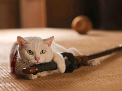 人気猫「あなご」の追悼企画や落語の寄席もあるニャ!10月から「吉祥寺ねこ祭り2019」が開催 | Cat Press