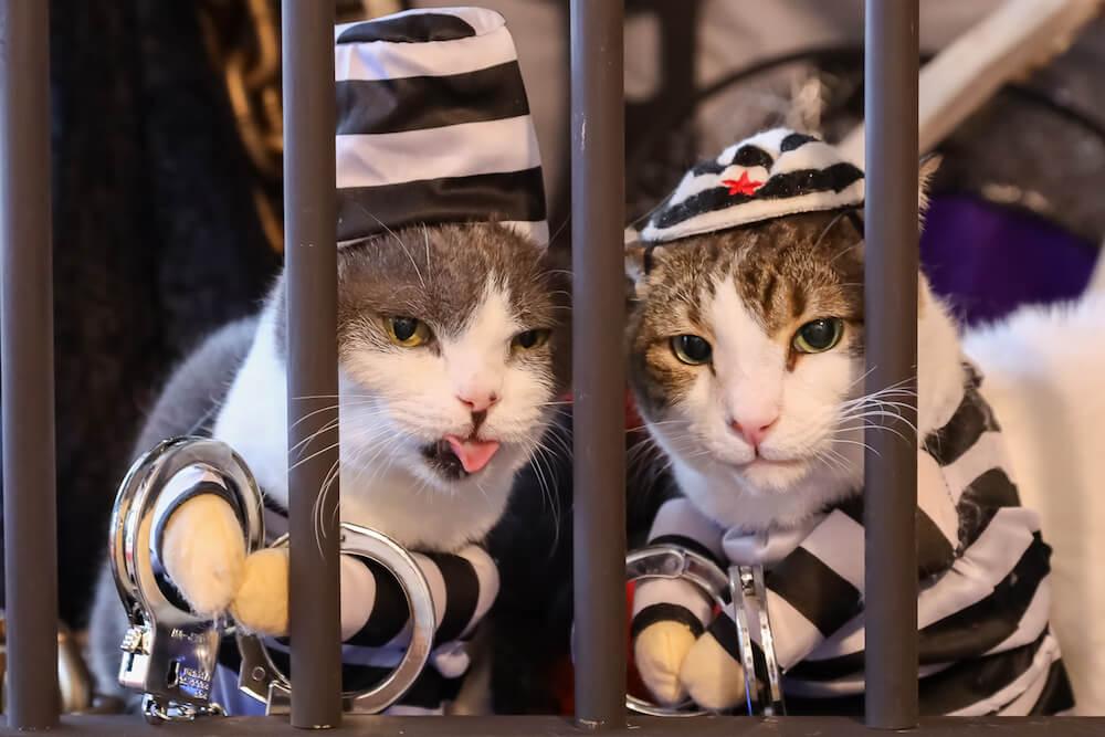 囚人のコスプレをした猫 by 猫カフェ 猫家