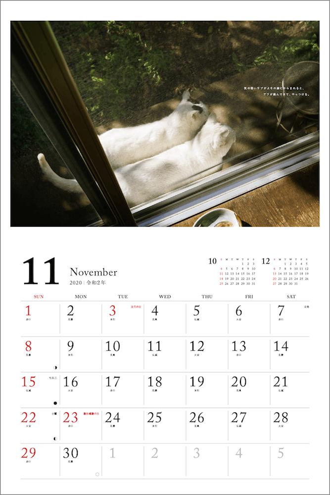 庭先で寄り添う2匹の猫 by 「2020 安彦家の窓辺の猫 カレンダー」の表紙