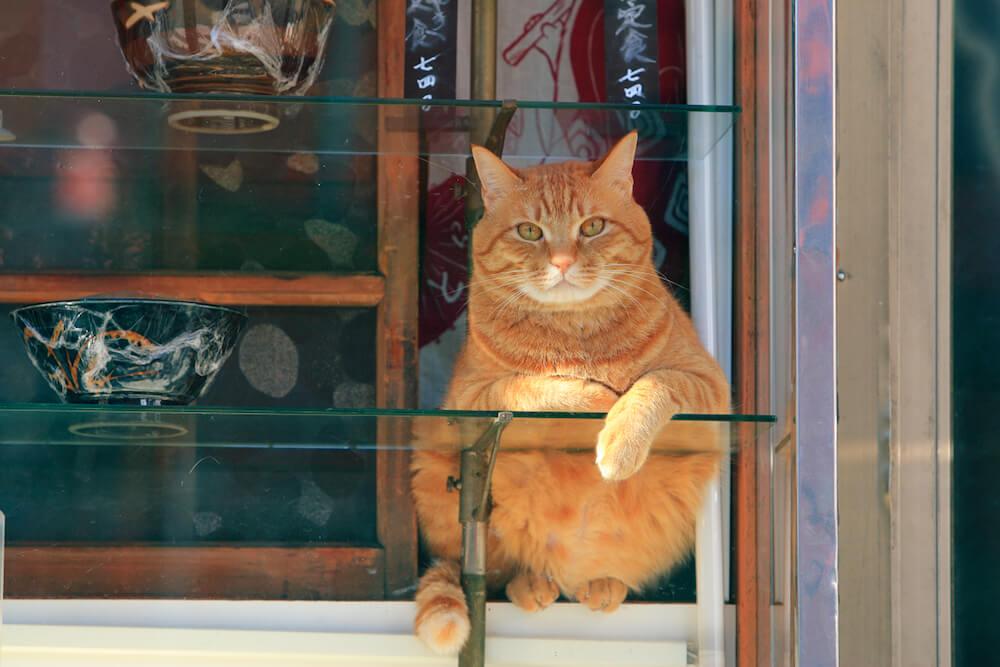 ケニア・ドイが撮影した茶トラ猫の写真 by ねこがかわいいだけ展