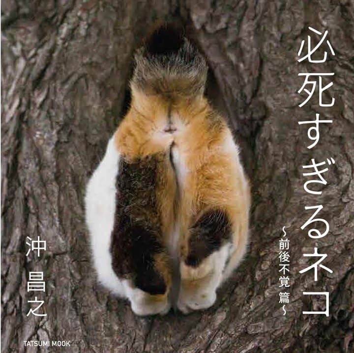 沖昌之の写真集「必死すぎるネコ ~前後不覚篇~」Amazon限定版の表紙カバー