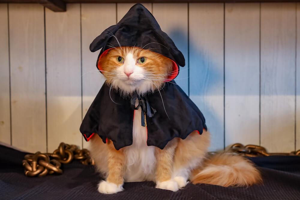 お化けのコスプレをした猫 by 猫カフェ 猫家