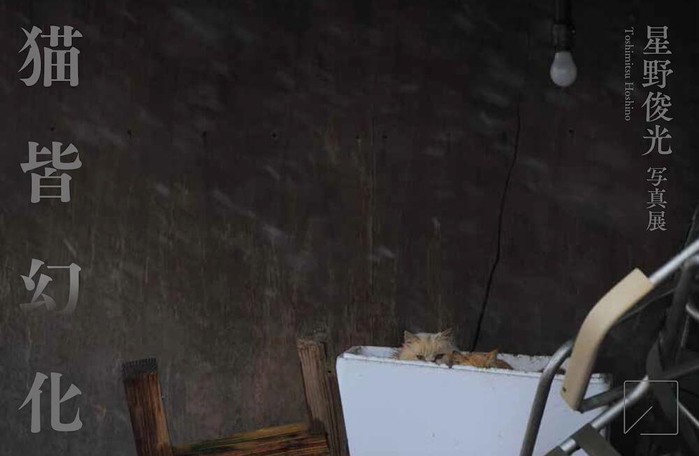 写真家、星野俊光さんの写真展 「猫皆幻化(ねこ みな げん け)」のメインビジュアル