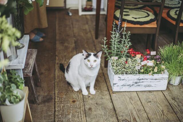 花屋の看板猫