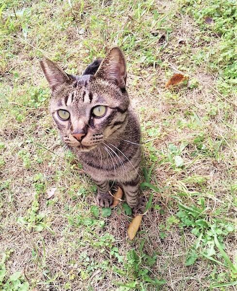 キジトラの野良猫写真