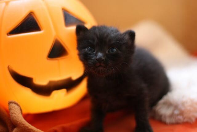 ハロウィンの定番イメージ「黒猫」