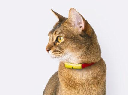 猫の首輪型デバイスCatlogが一般販売を開始!記録したデータを見れるスマホアプリも公開