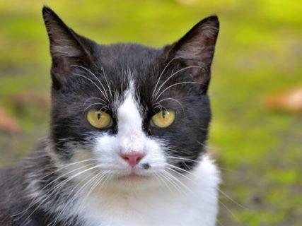 ふるさと納税で野良猫の命を救うニャ、生駒市が避妊手術の費用を全額負担する取り組みを開始