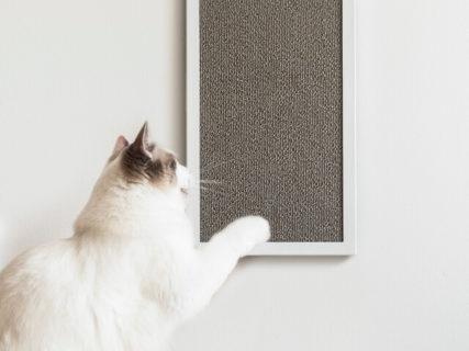 猫が爪を研ぐほど芸術性が高まるニャ!絵画のように飾れる壁掛けタイプの爪とぎ「ネコボード」