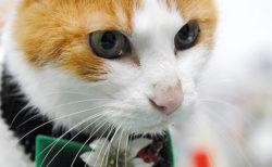 記念すべき10回目!日本全国から猫好き&猫アイテムが集まる「ニャンフェス」10/12に開催
