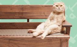 匠の技を猫に惜しみなく使った「ネコ家具」が新作4点を公開!お披露目会も開催されるニャ