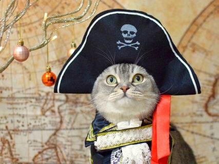 ニャンと1000枚のネコ写真が大集結!関西地方で初となる「ねこにすと展」が開催中&人気投票もあるニャ