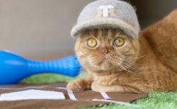 猫の抜け毛で作った阪神タイガースの帽子が可愛い…400点以上の作品が集う「ねこ休み展」が大阪で開催