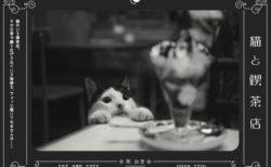 ネコがいる喫茶店の日常をのぞき見するニャ!写真家・関由香さんの写真集「猫と喫茶店」