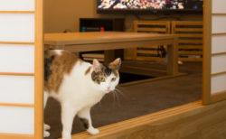 猫と快適に暮らす本格リノベーション「マイリノペット for ねこ」第2弾の施工事例が公開