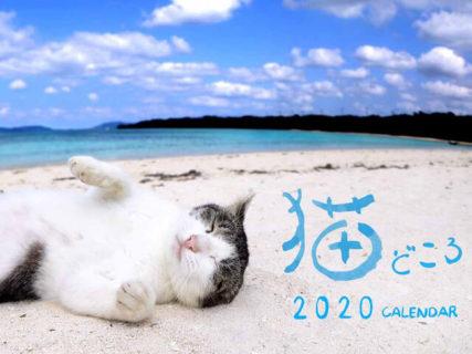 撮影者はネコ好きな報道カメラマン!毎年恒例の人気カレンダー「猫どころ2020」が発売開始
