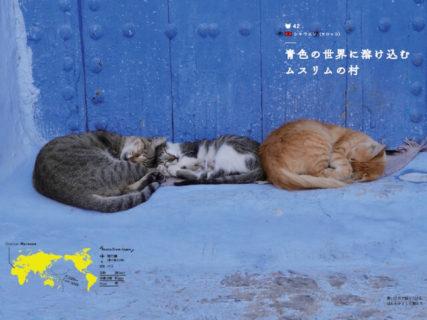 美しい街には猫がいる!世界37カ国・75の街を収録した書籍「世界の美しい街の美しいネコ 完全版」