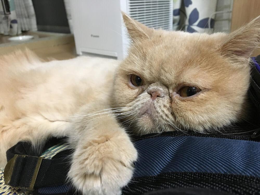 人気イラストレーター「ぼく」の愛猫「たかし」