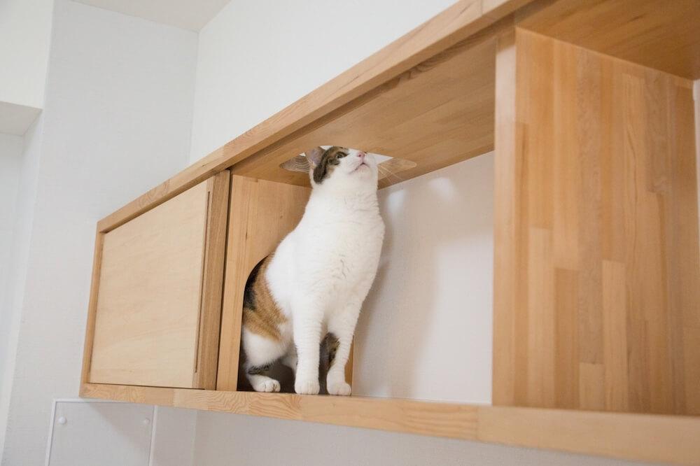 マイリノペット for ねこのオリジナル家具「マイリノ・キャビネット」から首を出す猫