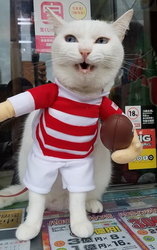 ラグビー日本代表のジャージを着た宝くじ売り場の看板猫「マコちゃん」
