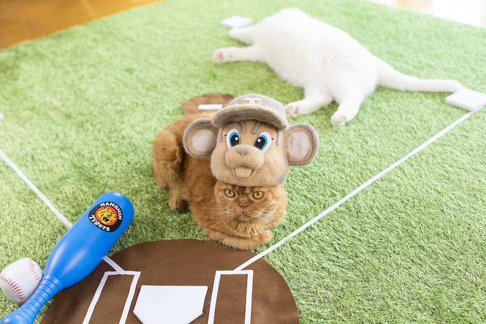 猫の抜け毛で作ったトラッキーの帽子をかぶる猫 by rojiman