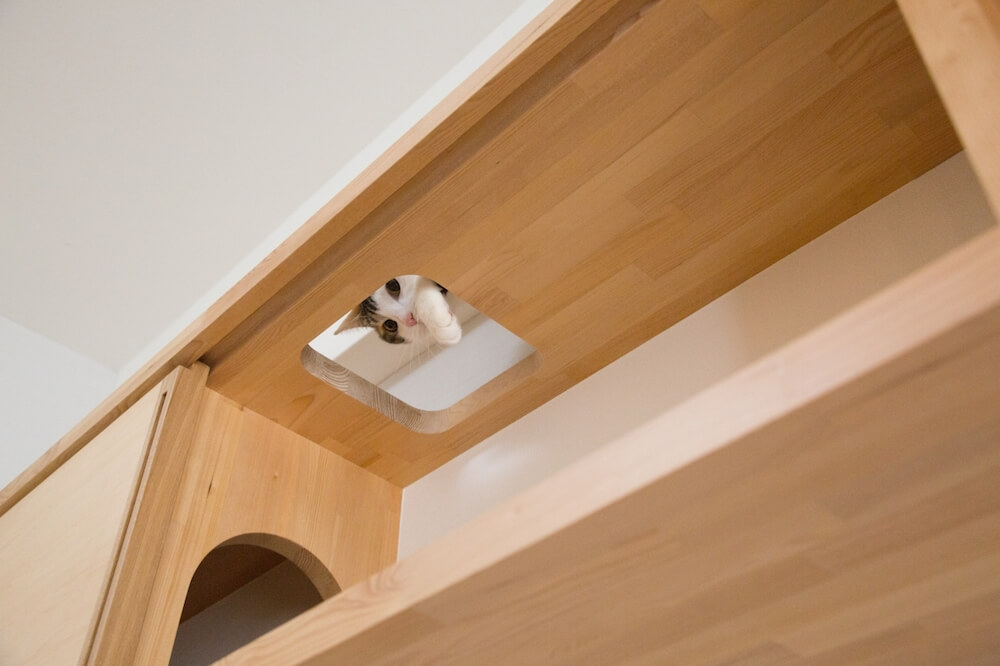 「マイリノ・キャビネット」の上から顔をのぞかせる猫